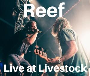 Reef (2)